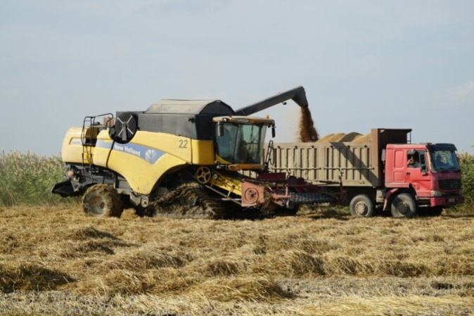 В Дагестане собрали рекордный за последнюю третья часть века сбор риса