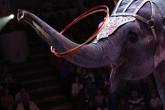Международный цирк огромных зверей прибыл вМахачкалу