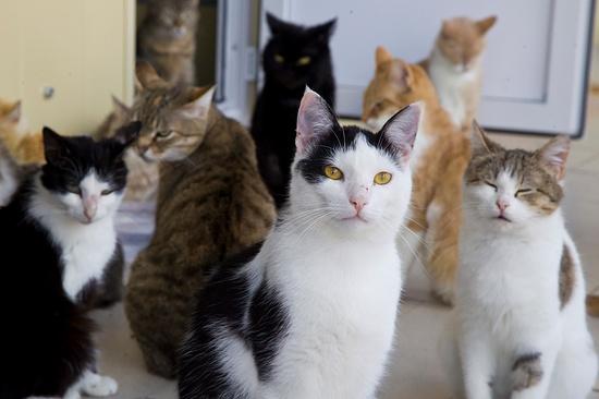 Казанцы могут отправить собственных котов накастинг